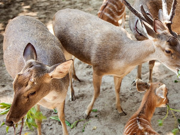 Feed some of the free roaming deer
