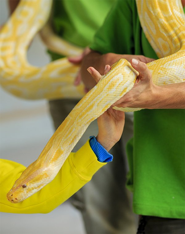 Get up close with a snake encounter