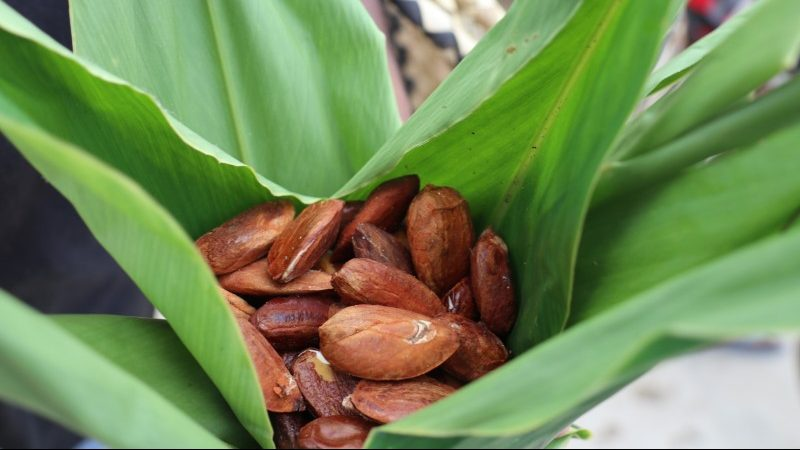 Ngali nuts